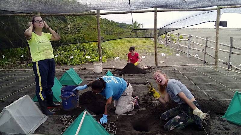conservación de tortugas marinas en Costa Rica