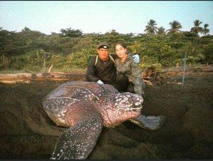 tortugas marinas en costa rica con adventure volunteer