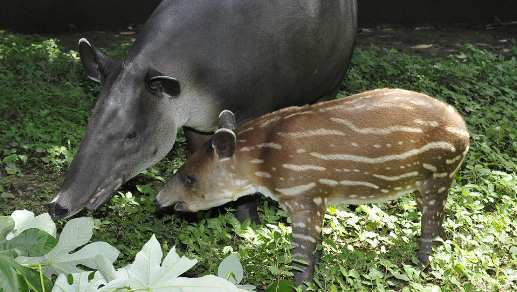 volunteering in Costa Rica with animals