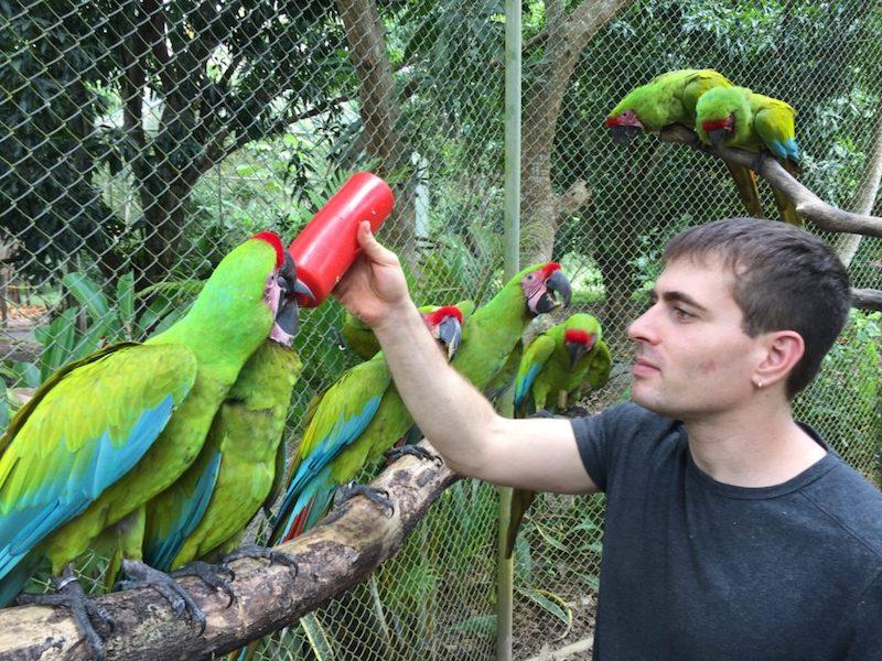 vacaciones solidarias costa rica animales