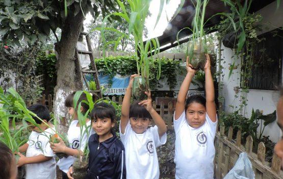 Voluntariado con huerto escolar en guatemala