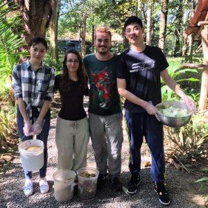 voluntarios en programa de animales en costa rica