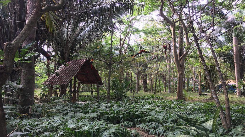 entorno natural para voluntariado en costa rica