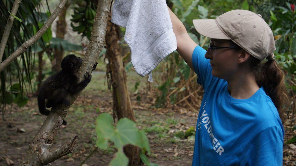 voluntaria entrenando a bebe congo huerfano en costa rica