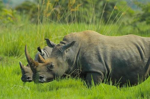 animales uganda