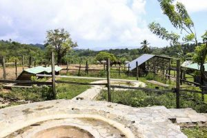 programa de voluntariado de rescate y cuido de animales en republica dominicana