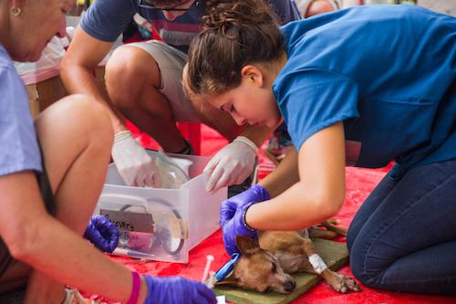 voluntariado cuido animal en república dominicana