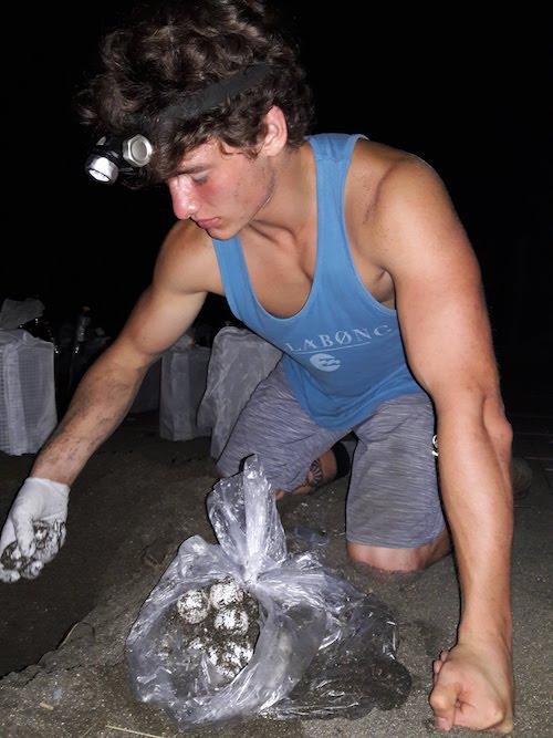 voluntarido con tortugas en panama
