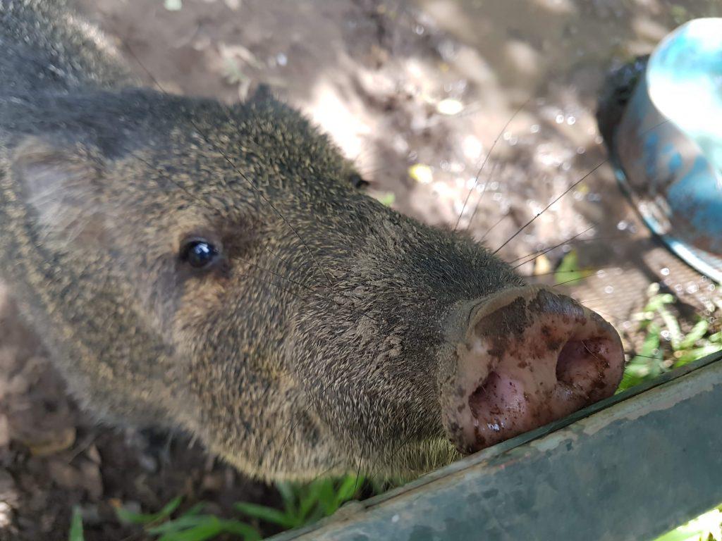 voluntariado con animales en Costa Rica