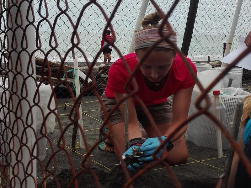 turismo sostenible con tortugas marinas panamá
