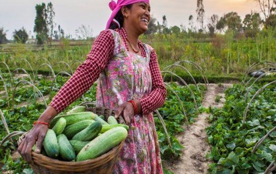 voluntariado agricultura y ganadería en Nepal