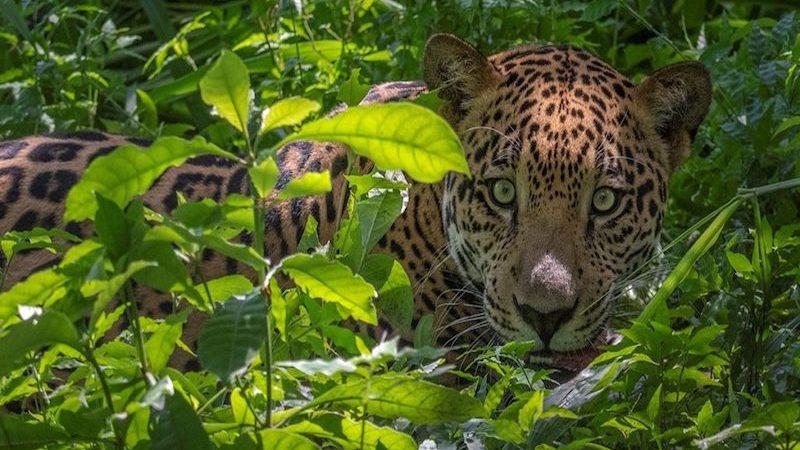 Voluntariado refugio de animales en Costa Rica