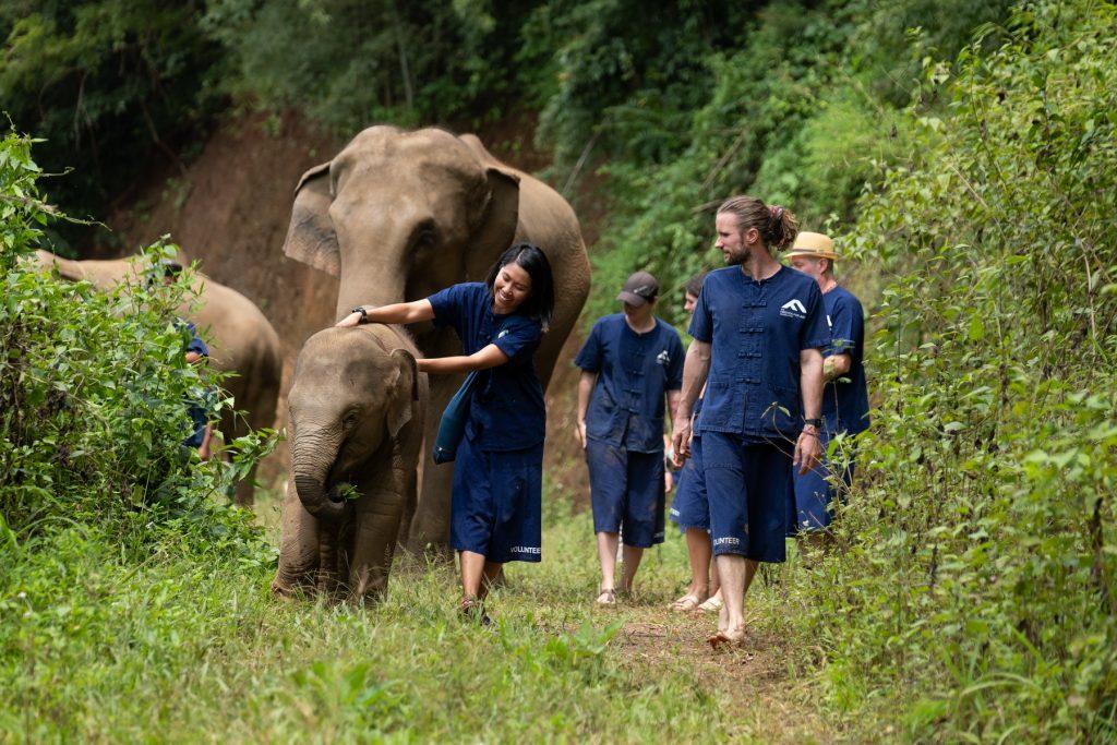 voluntariado con animales en tailandia