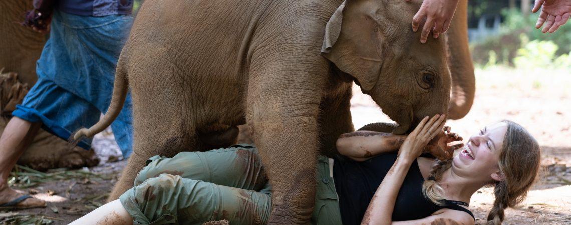 voluntariado con elefantes en tailandia