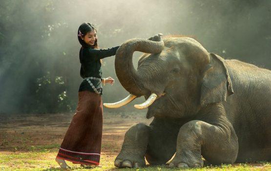 voluntariado con elefantes
