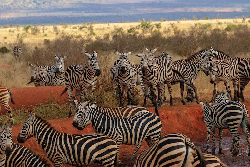 kenia safari voluntariado