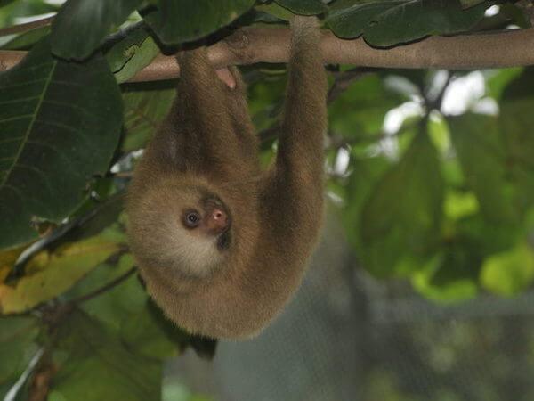 Voluntariado en Costa Rica