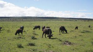 familia-de-elefantes-kenia