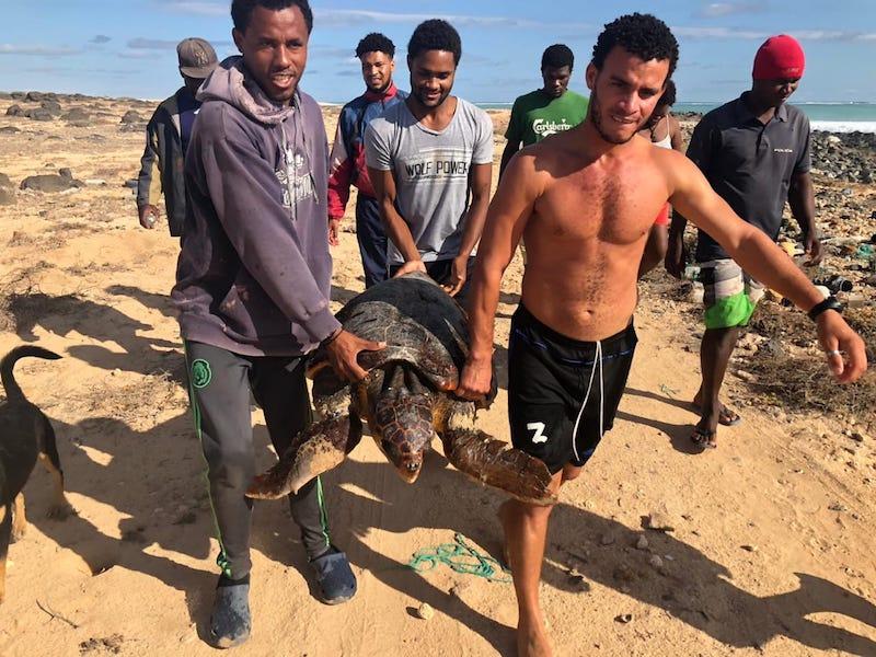 Conservación e investigación de tortugas marinas en Cabo Verde