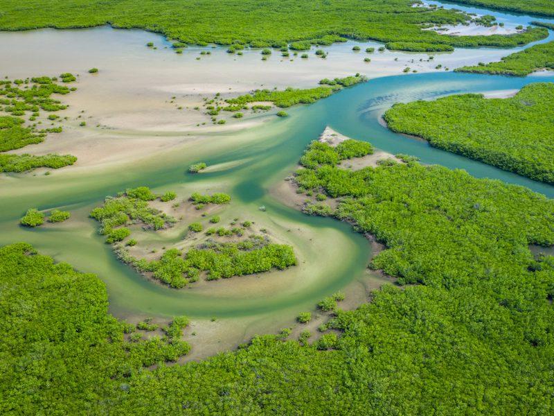 Parque Nacional del Delta Saloum Senegal