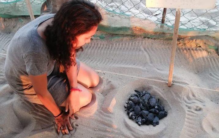 voluntariado de tortugas en Mexico